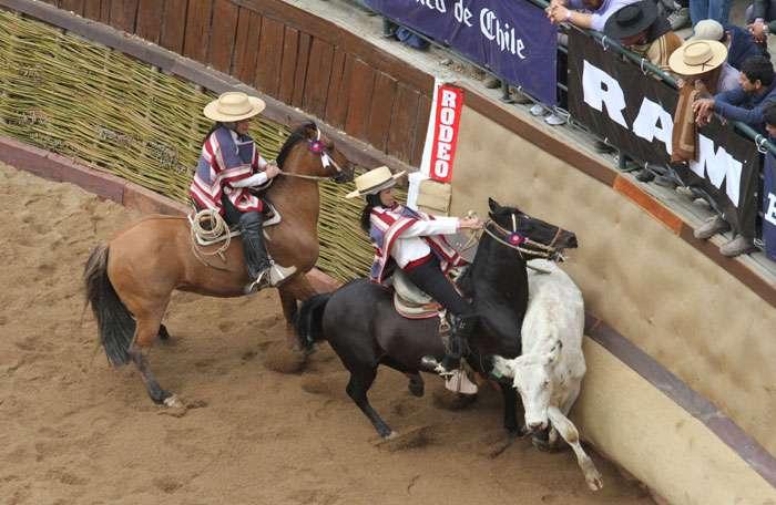 Con el desarrollo de series promocionales y dos clasificatorias para la  final se vivió la primera jornada en el 71° Campeonato Nacional de Rodeo -  El Rancagüino